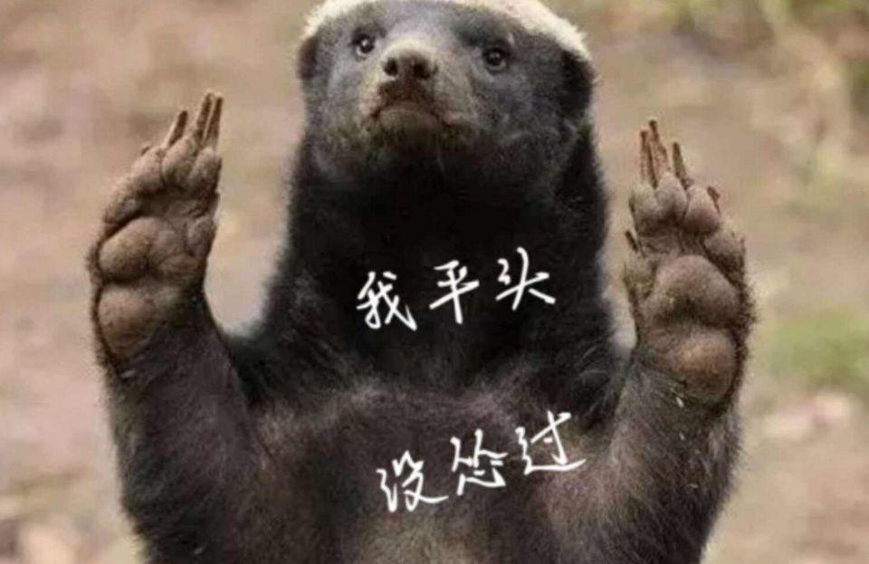 平头哥是什么梗?平头哥是什么动物?蜜獾为什么叫平头哥