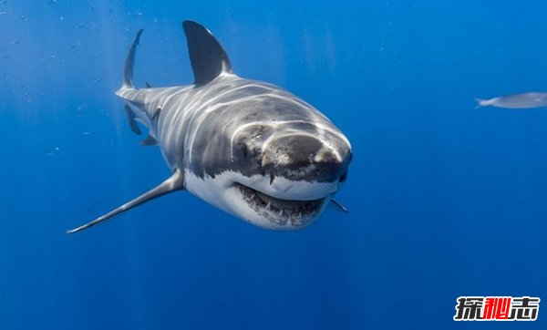 海洋里最危险的动物是什么?揭秘海中十大危险动物