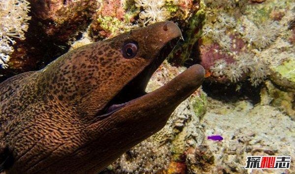 海洋里十大厉害的动物 炮弹鱼上榜,第六荣登吉尼斯记录
