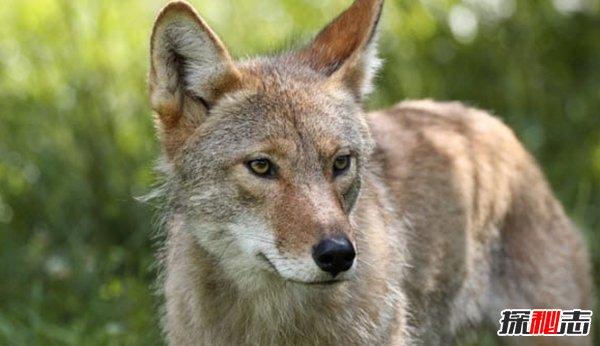 什么动物最难驯服?揭秘人类最难驯服的10种动物