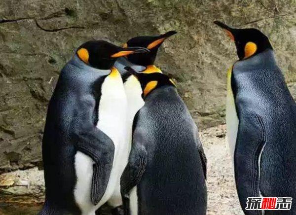 终身一夫一妻制的十种动物 动物界也有真爱!(大吃一惊)