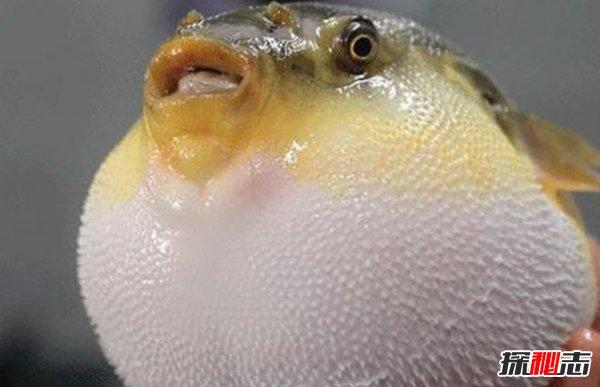 动物如何繁殖后代?盘点动物10大特殊繁殖方式(大开眼界)