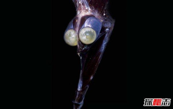 世界上有哪些怪鱼?盘点10种让人害怕的鱼类(逆天存在)