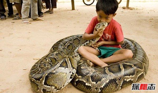 你害怕什么动物?最让人不敢靠近的10大动物(能吓傻)