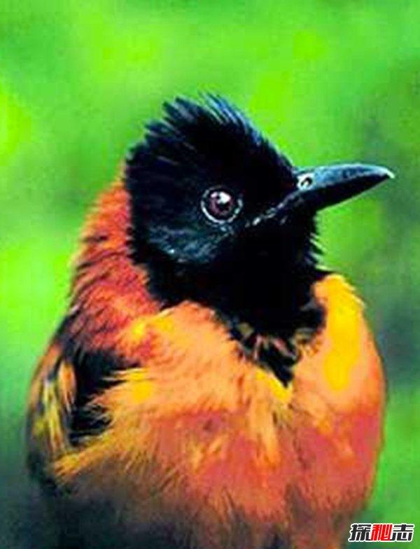 鸟有哪些防御方法?盘点防御力最强的前10鸟类(预料之外)