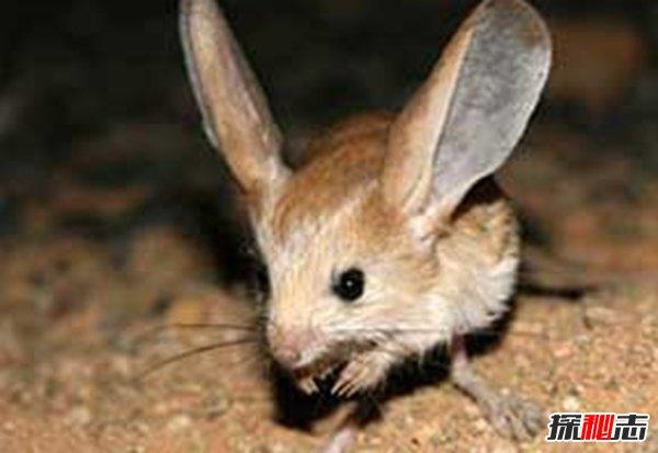 什么动物的成长变化很奇特?进化的奇奇怪怪的10大生物