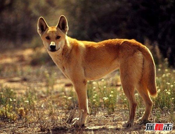 什么动物最让人害怕?盘点让人望而生畏的十大动物