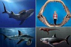 巨齿鲨的天敌是谁 它曾是名副其实的海洋领主