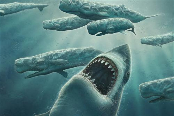 鲨鱼为什么不吃鲸鱼?一头蓝鲸相当于100头鲨鱼(围捕费时)