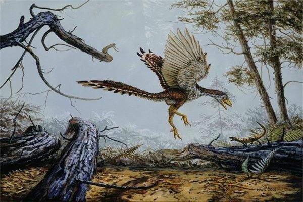 鸟类的祖先是什么鸟?1.4亿年前的带毛恐龙(擅低空飞行)