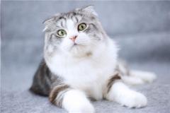猫的祖先并非老虎,几千年前分化(家猫已被驯化3500年)