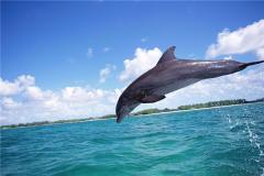 海豚的祖先是什么?和人类是否有亲缘关系(早期形似鬣狗)