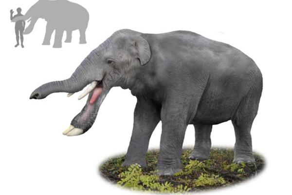 大象的祖先是什么?它拥有巨大的铲状下巴(割树皮切草根)