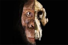 猿类的祖先渐新古猿化石,在埃及被发现(距今三千万年)