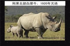 十大濒临灭绝的动物 第一仅剩一只 第四找不到同类繁殖