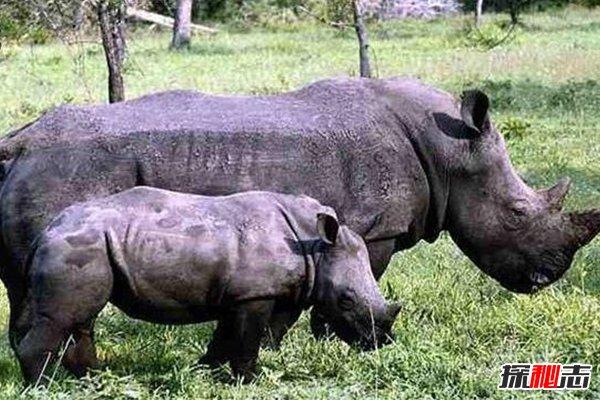 世界珍稀动物第一名,全球只有35只,入选极危动物
