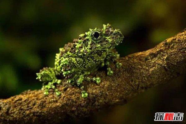 """史上十大神秘动物:青蛙身上长""""青苔"""",恐龙虾活2亿年"""