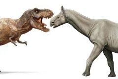 巨犀和霸王龙哪个大?重达20吨的史前巨犀更胜一筹