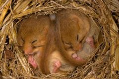 为什么动物要冬眠?冬眠时间最长的是什么动物(3/4人生都在睡觉)