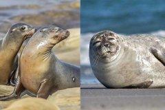 海狮和海豹有什么区别?原来最大的区别是这5个部位