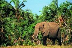 非洲侏儒象多大?现存最小的大象(成年雄性不到2.8米)