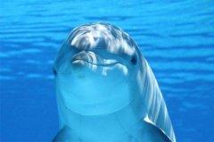海豚为什么会救人?除了智商高还有这些原因(泅出反应)