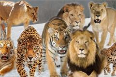 十大雄狮联盟中谁最强 草原七雄雄狮联盟最厉害