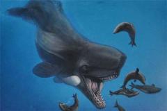 梅尔维尔鲸的天敌是什么?为何梅尔维尔鲸会灭绝