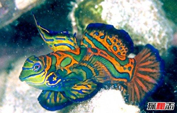 世界上都有什么样的鱼?盘点世界上十大最美鱼(附图片)