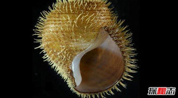 世界上十大最凶猛的蜗牛 第九已造2亿多人不安(致命感染)