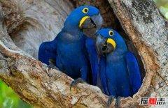 世界上颜值最高的十种鸟 第一很通人性羽毛华丽耀眼