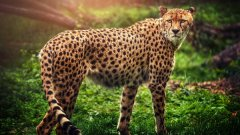 世界十大反应最快的动物排名 猎豹登顶可达110KM/小时