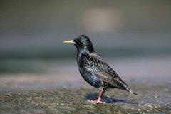 排名前10最粘人的鸟 画眉仅第二第一可爱迷人还会说话