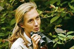 知名动物学家:珍妮·古道尔:陪伴黑猩猩38年(最懂猩猩)