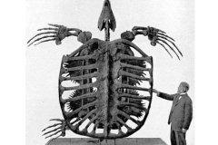 体型最大的海龟:生活于白垩纪的古巨龟(重2.2吨/长4.9米)