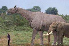 最大的陆上哺乳动物:巨犀,相当于非洲象4倍(最大8.23米)