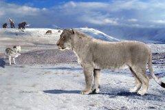 最重的猫科动物:美洲拟狮,冰河时代巨无霸(超450公斤)