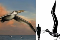 世界上最大的飞鸟:桑氏伪齿鸟,翼展7.3米(可滑翔数公里)