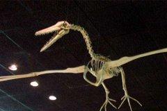 世界上最大的飞禽:桑氏伪齿鸟,化石需吊车搬运(翼展7.3米)