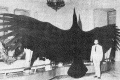 世界上最重的飞鸟:阿根廷巨鹰,相当于小型飞机(重72公斤)