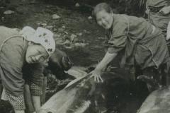日本人杀海豚七大原因:第一杀海豚节的习俗是源头