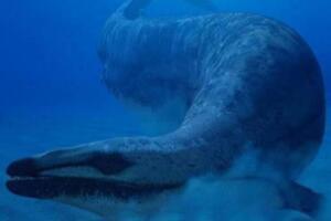 鲸的始祖:始祖鲸,没有呼吸孔(体长可达21米)