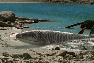 泥盆纪最凶猛的生物,含肺鱼(长4米重2吨/可以单挑邓氏鱼)