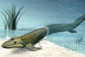 提塔利克鱼是人类祖先?鱼类及两栖类间的物种(已灭绝)