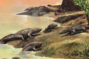 地球上最早的两栖类动物,鱼石螈(使人类可以呼吸氧气)