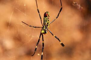 15件事让你怀疑世界,人每天用粪便刷牙/人一生会吃掉8只蜘蛛