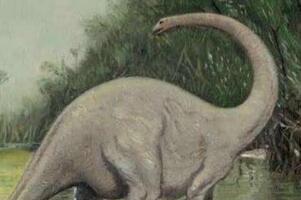 魔克拉-姆边贝吃人吗,吃树果不吃人(刚果恐龙实为非洲象)