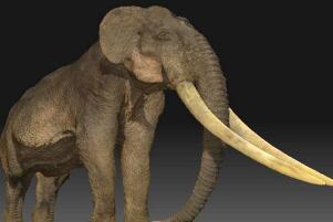 大象的祖先剑棱齿象,出现于1000多万年前(牙长达3-4米)