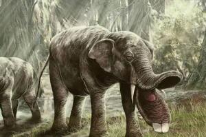 板齿象灭绝的原因,生存环境发生巨变(草原取代森林)
