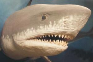 牙齿最多的动物排名,蜗牛有25600颗牙齿/鲨鱼一生换牙2万多颗